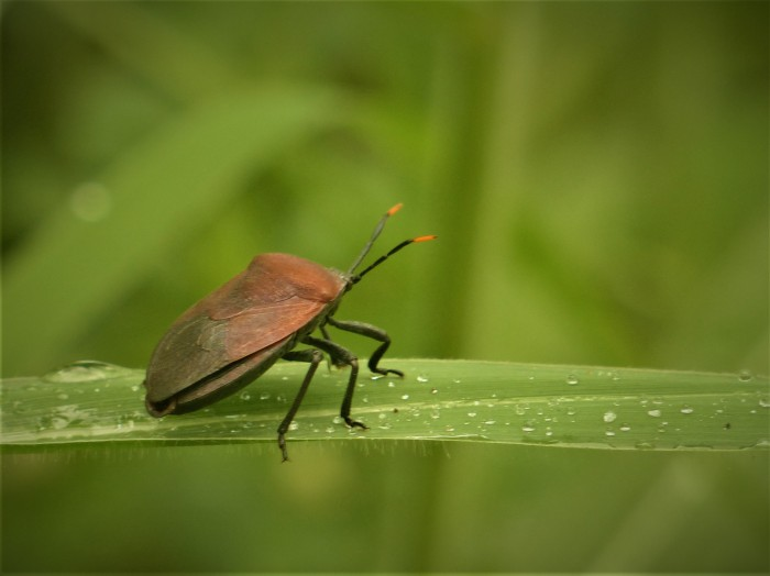 ferry_insect3