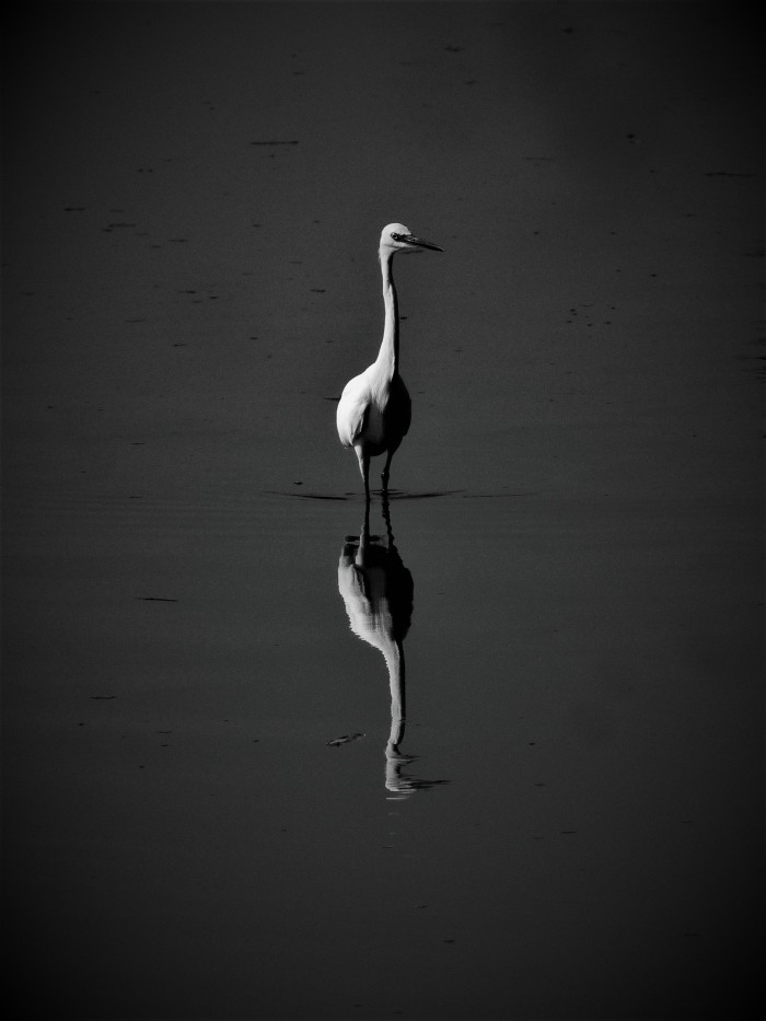 crane_bw