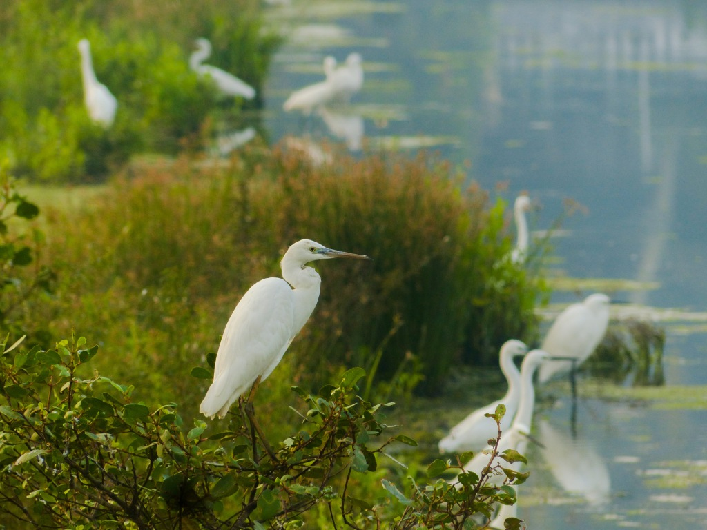 Egret colony ant Kadamakkudy Islands